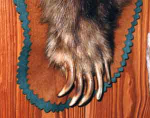Grizzly bear claw