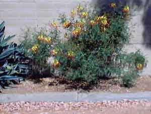 Unknown freeway flowers